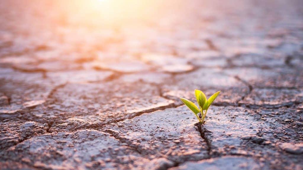 Grow Grassroots CX